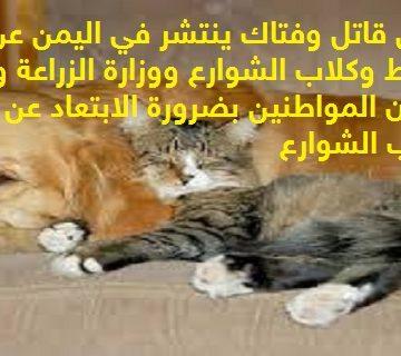 مرض قاتل وفتاك ينتشر في اليمن عن طريق القطط وكلاب الشوارع ووزارة الزراعة والصحة تحذران المواطنين بضرورة الابتعاد عنها